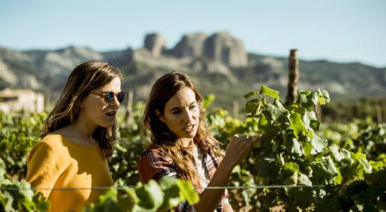 Gastronomie et vins avec les cinq sens